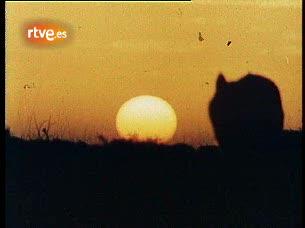 CAPÍTULO: El Hombre y la Tierra - El Lobo 1265369123861