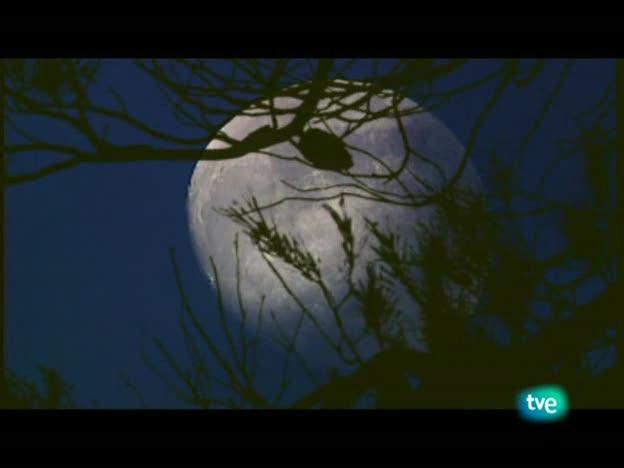 Jara y sedal - La hora de la patirroja