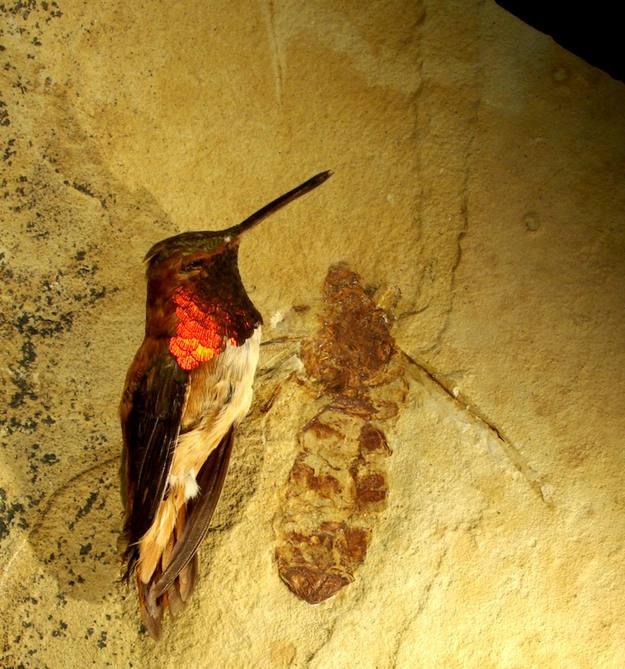 La hormiga gigante descubierta en Wyoming (EE.UU) era tan grande como un colibrí