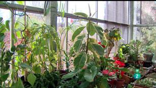 La Aventura del Saber. TVE. Hospital de plantas