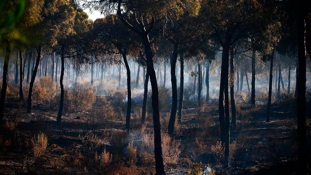 Las imágenes aéreas del incendio nos dan una idea de cómo es la situación en Huelva