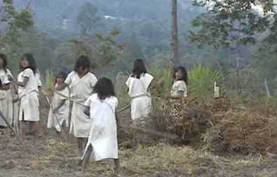 Informe semanal - Indígenas entre dos fuegos