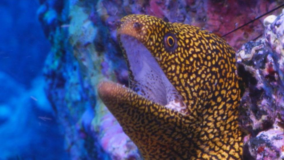 La Isla del Hierro podría albergar un parque nacional 100% marino