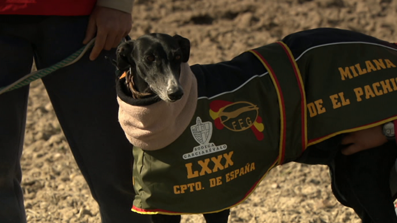LXXX Campeonato de España de galgos. Final