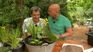 Aquí la tierra - Un jardín acuático en un balde