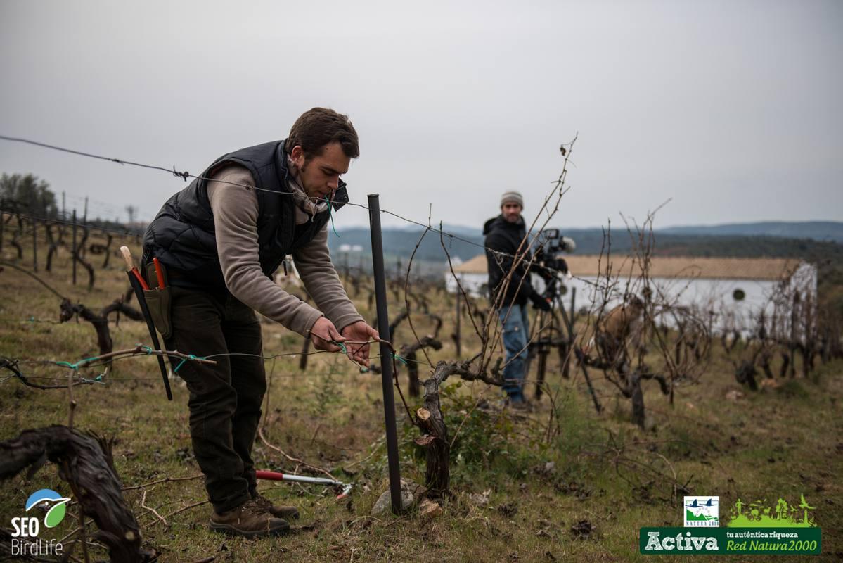 José Antonio, trabajando en sus viñedos en la sierra norte de Sevilla