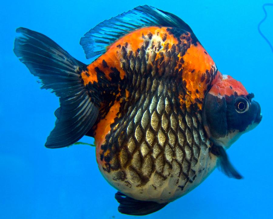 El d a en im genes 26 de noviembre de 2010 for Cria de peces ornamentales