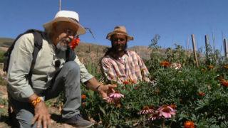Aquí la tierra - Juan Plantas y la equinácea
