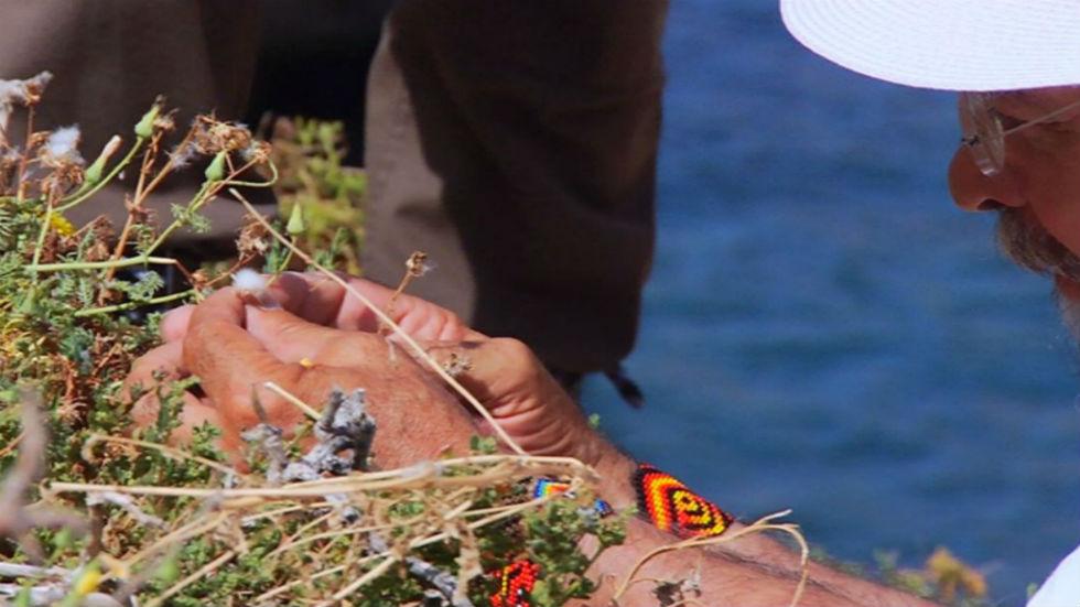 Aquí la tierra - Juan Plantas y la isla del tesoro