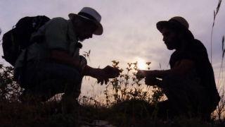 Aquí la tierra - Juan Plantas y el panical
