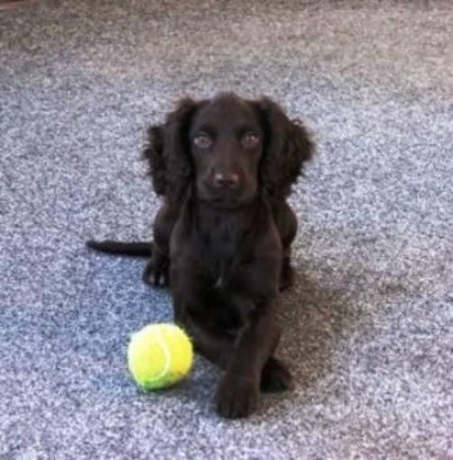 Uno de los perros entrenados en el centro de Biodetección