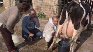 Aquí la tierra - Con la leche, nada se deja al azar