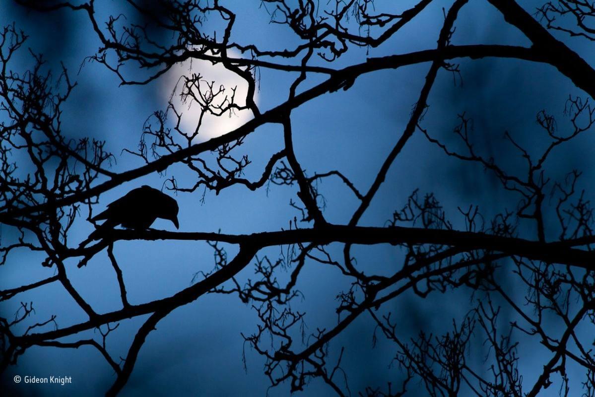 La luna y el cuervo. GIDEON KNIGHT