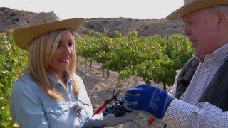 Aquí la tierra - La madre del vino