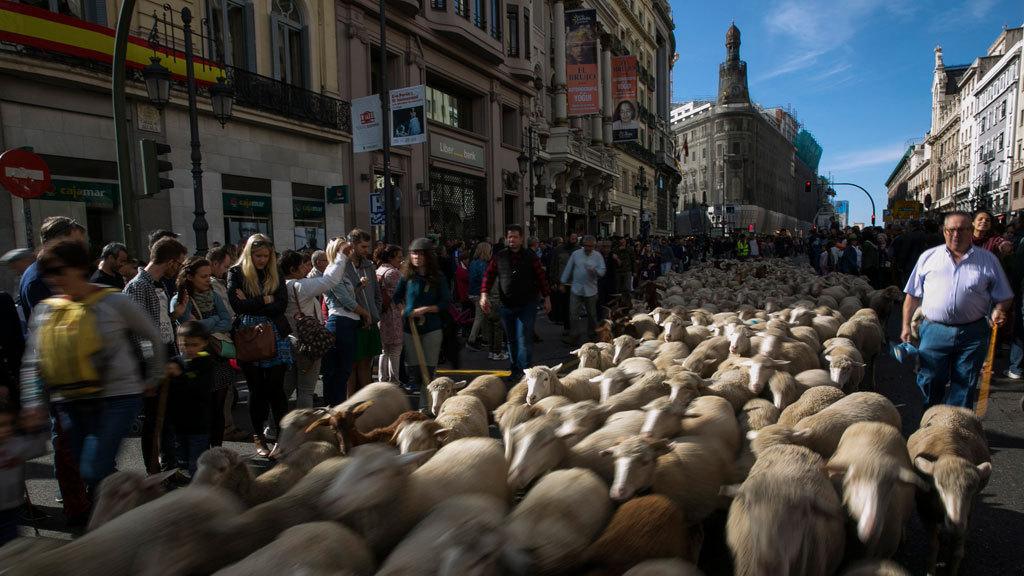 Madrid ha ofrecido una de sus más entrañables estampas