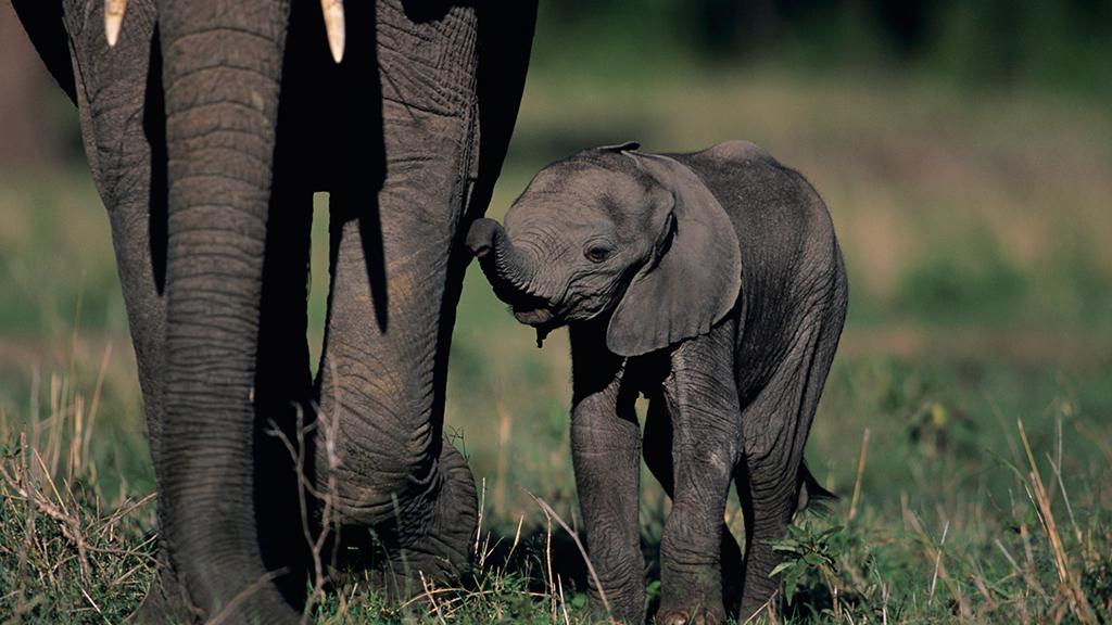 Grandes documentales - Mamás del reino animal: Primeros pasos