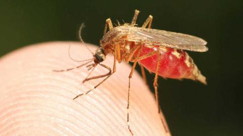 La Mañana - Marián García ofrece remedios para prevenir las picaduras de mosquito