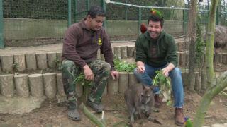 Aquí la tierra - Marsupiales, ¡qué animales!