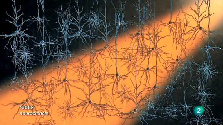 Redes - Modificar el cerebro con luz (V.O.)