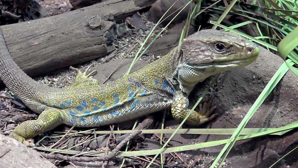 ¡Qué animal! - Parque Nacional de Monfragüe (Cáceres)