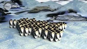 Tres14 - El movimiento de los pingüinos