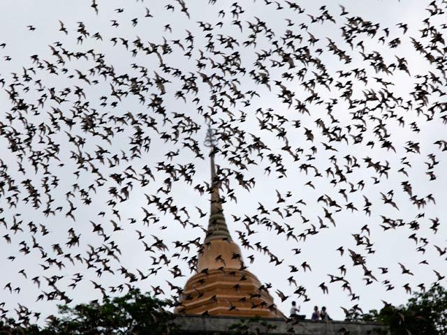 Biodiario - Los murciélagos