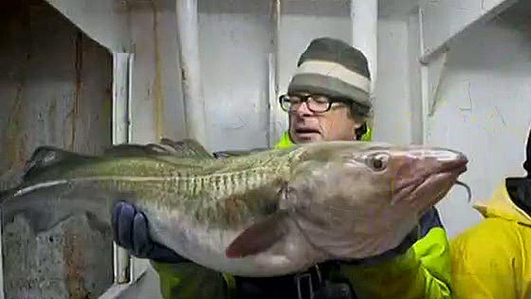'Ni un pez por la borda' , una campaña para denunciar los descartes en la pesca