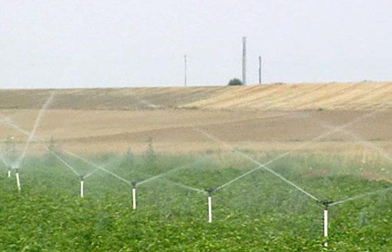 Hacía 12 años que la UE no aceptaba introducir en el mercado nuevos cultivos transgénicos