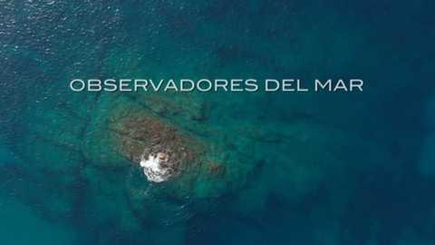 El escarabajo verde - Observadores del mar