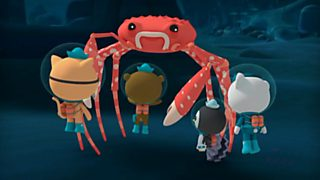 The giant spider crab
