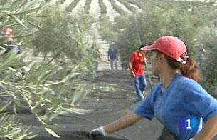 Ver vídeo  'El olivar, en quiebra técnica'