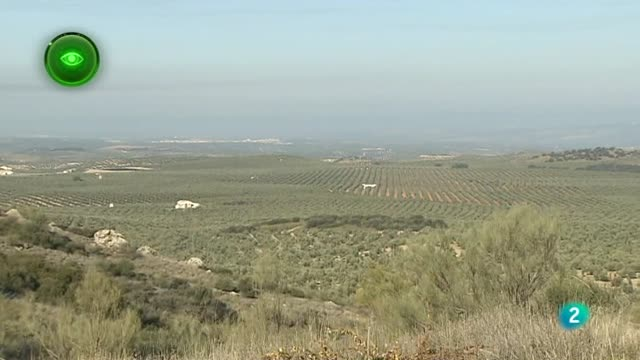 Agrosfera - Primer plano - Olivares Vivos