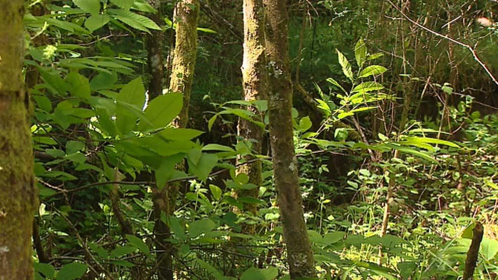 La ONU alerta del comercio ilícito de fauna y flora silvestre en el Día Mundial del Medio Ambiente