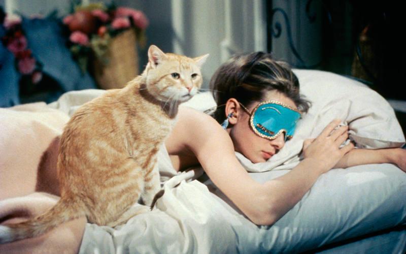Orangey y Audrey Hepburn en 'Desayuno con diamantes'