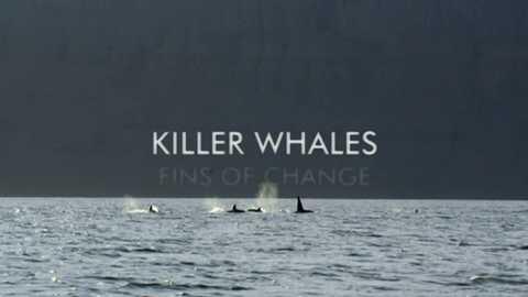 Grandes documentales - Orcas: Aletas de cambio
