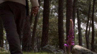 Aquí la tierra - Orquídeas en extinción