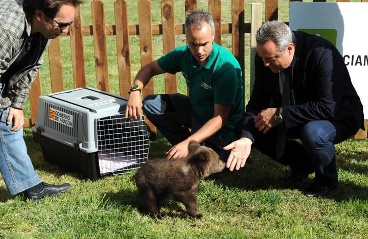 http://www.rtve.es/imagenes/osezno-recuperado-guardia-civil-trasladado-a-cabarceno/1276783869441.jpg