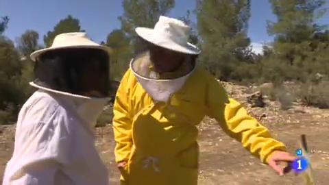 Comando Actualidad - Los otros azúcares - ¿De dónde viene la miel que consumimos?