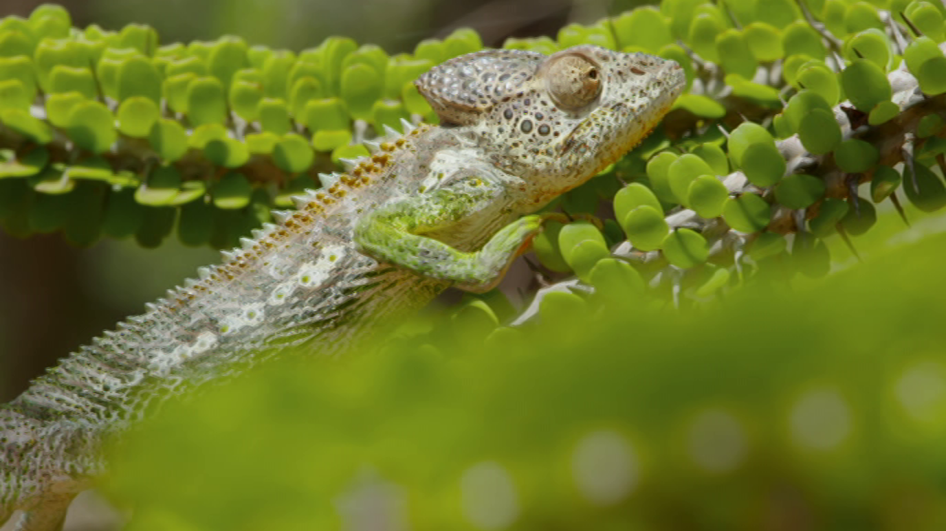 Planeta selva: Un mundo de espinas. Madagascar