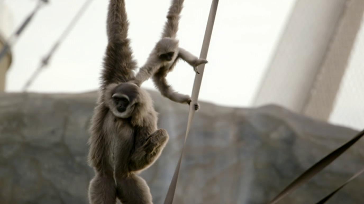 La vida secreta del zoo. Episodio 14