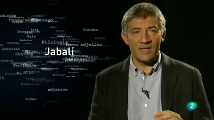 Para todos La 2 - El origen de las palabras - La palabra 'Jabalí'