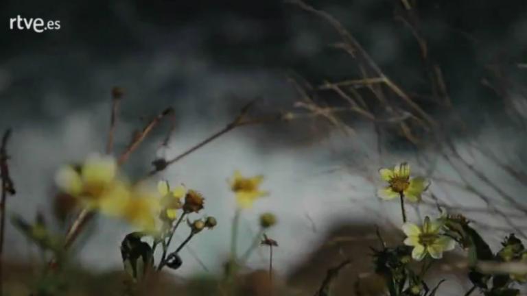 Palabra Voyeur - Poesía completa. Paul Auster - 08/06/16