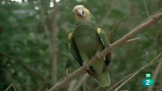 El hombre y la Tierra (Serie venezolana) - El paraíso de las aves