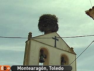 España Directo - Pendientes de un nido