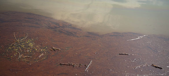 Vista de petróleo dentro de barreras contra el vertido que se supone deben proteger los pantanos y humedales en la desembocadura del río Mississippi en el Golfo de México, Luisiana.