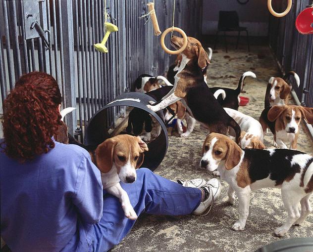 http://www.rtve.es/imagenes/perros-sometidos-a-experimentacion-animales/1273673401215.jpg