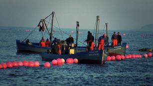 Aquí la Tierra - La pesca del atún en Cádiz, la almadraba