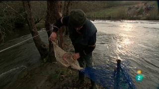 Jara y sedal - La pesca tradicional de la lamprea en Galicia