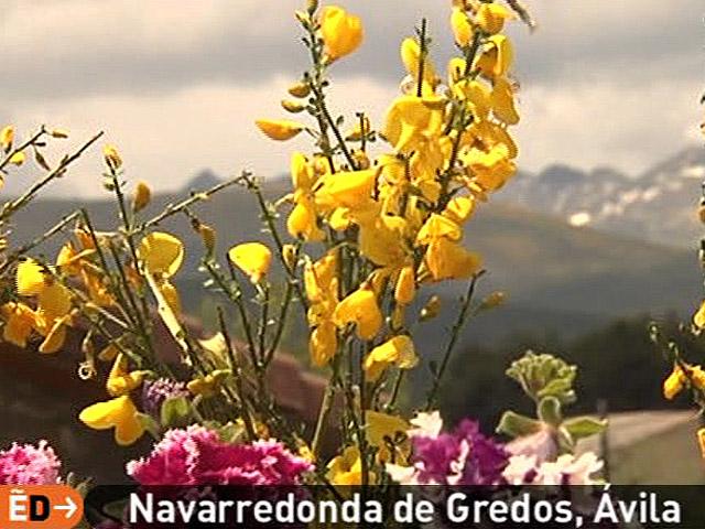España Directo - El piorno en flor