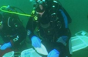 Planchado extremo bajo el agua